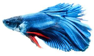Interpretation du reve : Les poissons
